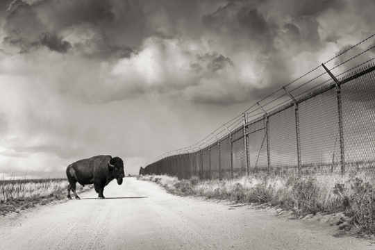 """Don't Fence Me In"" Fine Art Photographic Print"