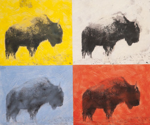 Four Bison Four Colors, 20x20 inch, $950 Sold