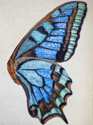 Blue Butterfly Wing / 30x20 inch / $1800
