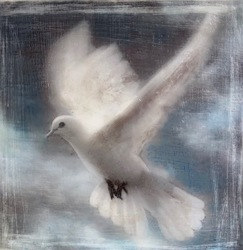 Wings of A Dove / 6x6 inch / Sold